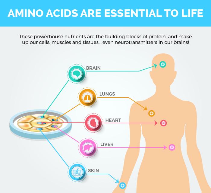 Amino-acids Infographic